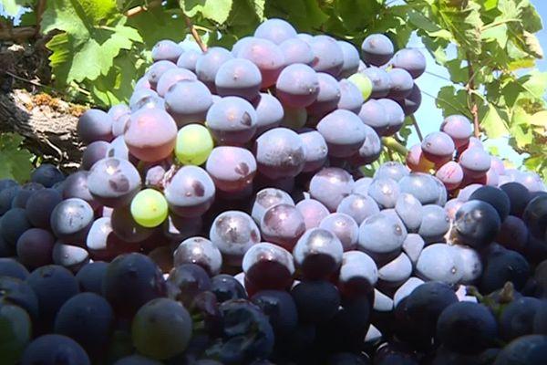 Alors que la consommation des vins est en baisse, les vins de Bourgogne continuent à gagner des parts de marché