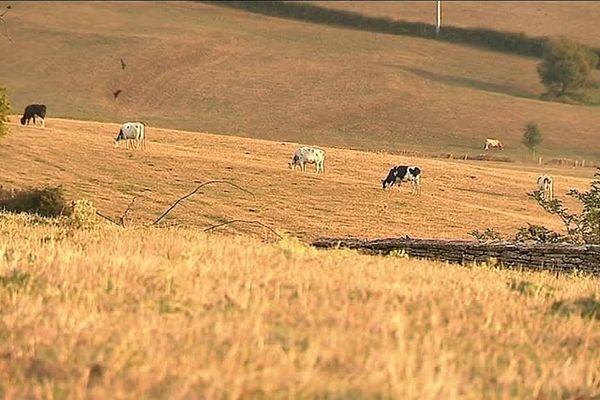 Les éleveurs veulent faire reconnaître la sécheresse en calamité naturelle.