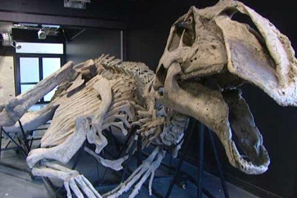 Le dinosaure-momie exposé au Paléospace de Villers-sur-mer