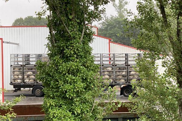 L214 demande la fermeture de l'abattoir de dindes du Faouët dans le Morbihan