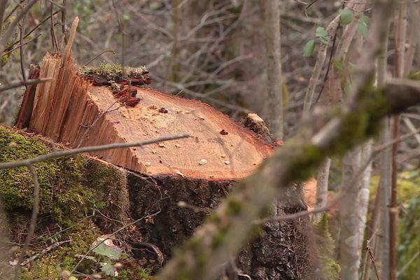 En janvier-février 2021, la commune de Perles-et-Castelet (Ariège) avait été victime de coupes sauvages et de vols d'arbres centenaires. Des bûcherons espagnols avaient été identifiés comme les auteurs des faits. L'affaire a été portée en justice et un homme sera jugé le 14 décembre 2021.