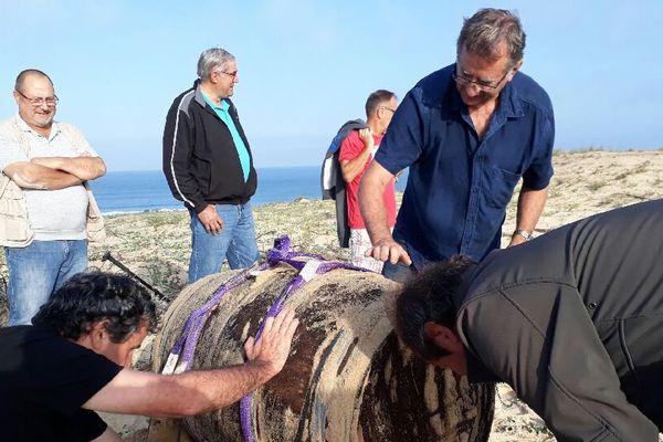 Les vignerons de Tursan dans les Landes renouent avec la tradition !
