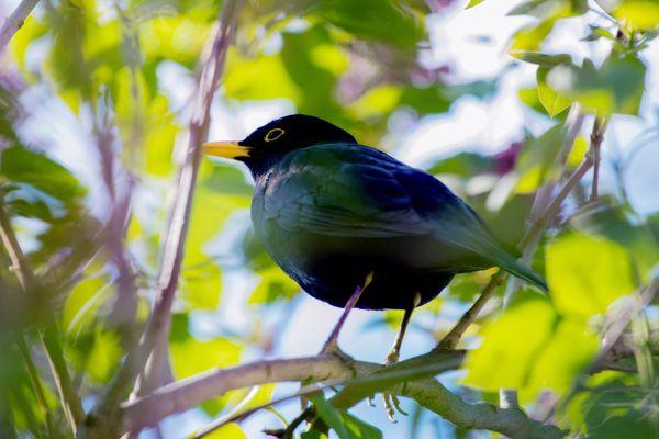 Le nombre d'observation d'oiseaux transmises sur le site de la Ligue pour la protection des oiseaux a augmenté de 30% en Loire-Atlantique depuis le début du confinement.