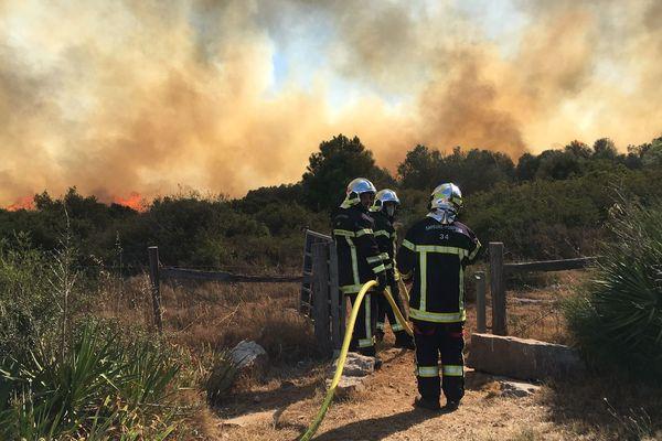 Le feu de forêt parti de Fabrègues, dans le massif de la Gardiole, a brûlé une centaine d'hectares de végétation.
