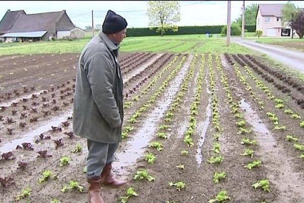 Les salades ont les pieds dans l'eau