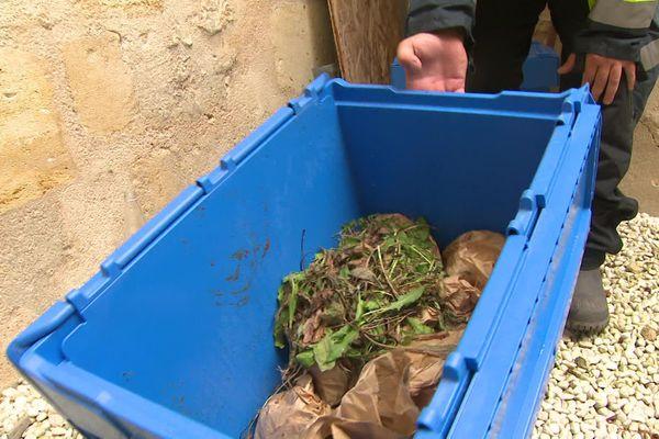 Les Détritivores passent chez les particuliers et les collectivités pour récupérer et valoriser  leurs déchets ménagers