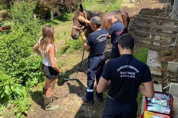Les sapeurs pompiers de Sospel appuyés par le groupe de Sauvetage Animalier des sapeurs-pompiers ont été appelés sur la commune pour un cheval tombé dans un fossé le 6 juin dernier.