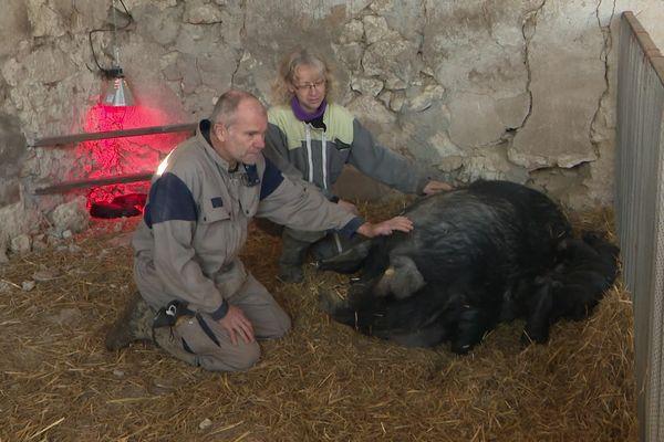 Pascal et Catherine Lesage éleveurs de porcs gascons