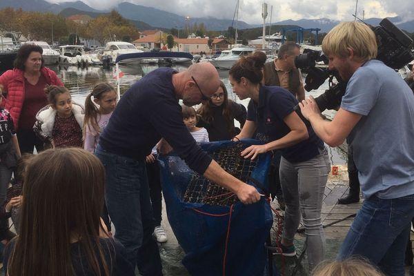Saint Florent (Haute-Corse), le beau succès des nurseries marines Biohut
