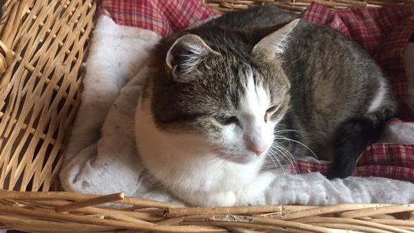 Des chats repérés sur Facebook sont ensuite récupérés dans les refuges.