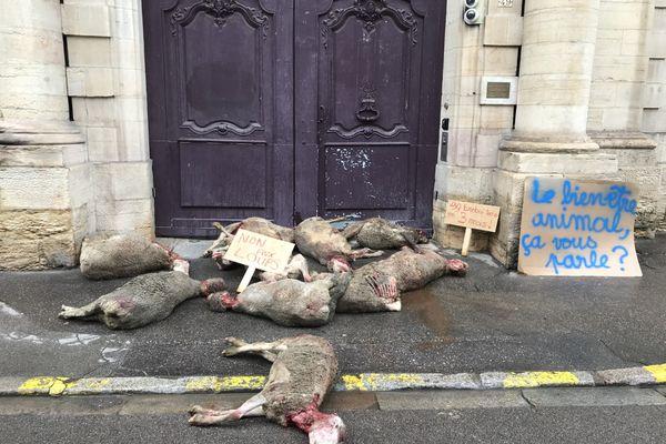 Les carcasses ont été déposées devant l'entrée de la préfecture de Côte-d'Or à Dijon ce samedi 13 mars.