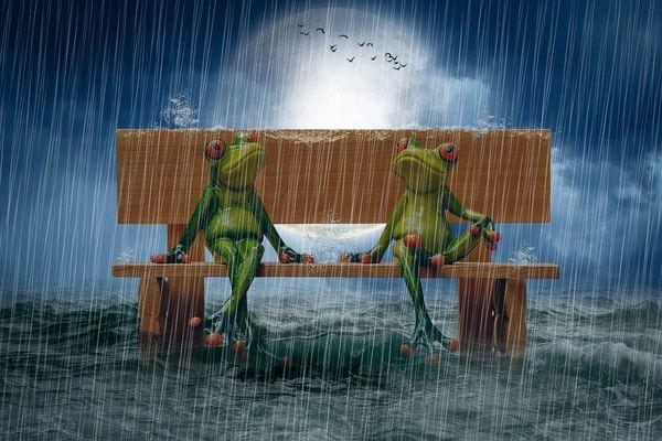 C'est la fête à la grenouille