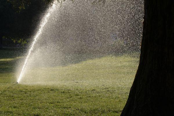 Le matin, c'est toujours le même rituel:: arrosage des pelouses et des végétaux
