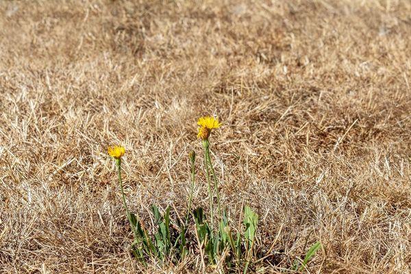 Avec la chaleur et la sécheresse de l'été, la végétation a souffert