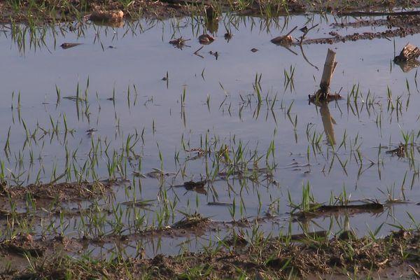 Des champs gorgés d'eau