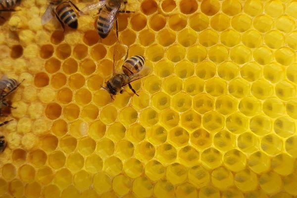 Les abeilles sont particulièrement victimes des produits chimiques utilisés par les professionnels comme les particuliers.