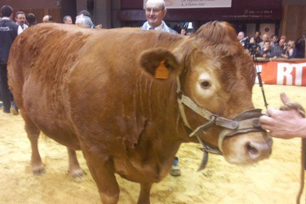 La vache adjugée 13 100 € cet après-midi aux enchères Blason Prestige