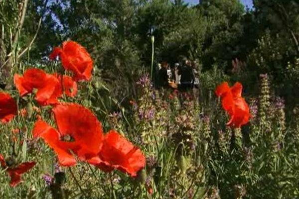 Dans son immense jardin le docteur Claudine Luu explique les vertus du coquelicot.