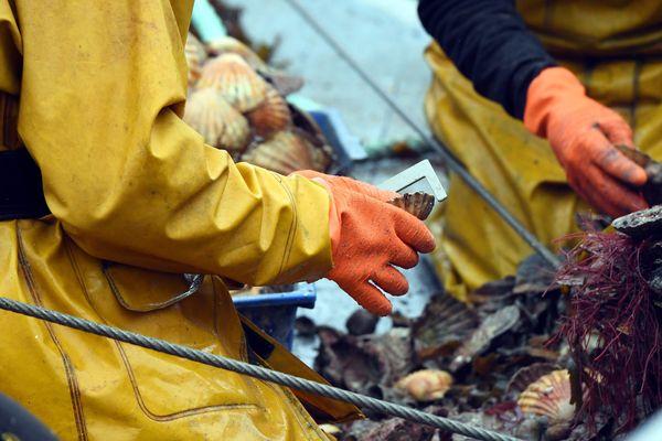 """Le site web """"Mon pêcheur"""" permet de favoriser la vente directe entre le pêcheur et le client"""