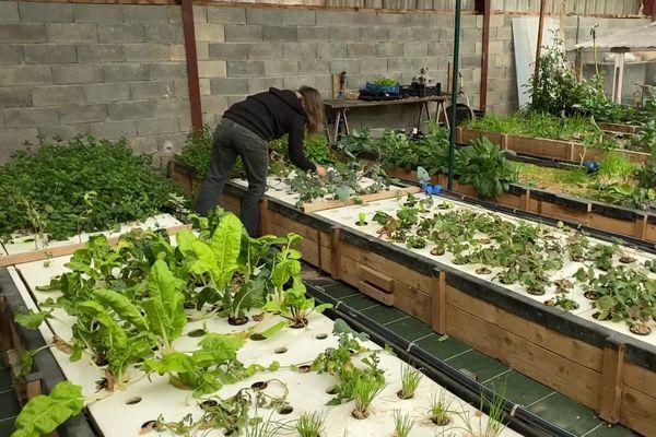 Elise Geyelin dans sa ferme d'aquaponie qui mèle aquaculture et hydroponie, de la culture hors sol.