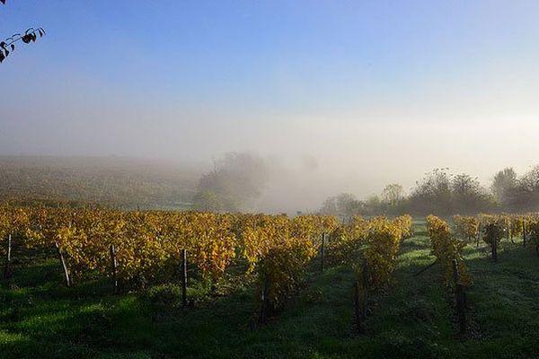 vignoble de Charente en novembre