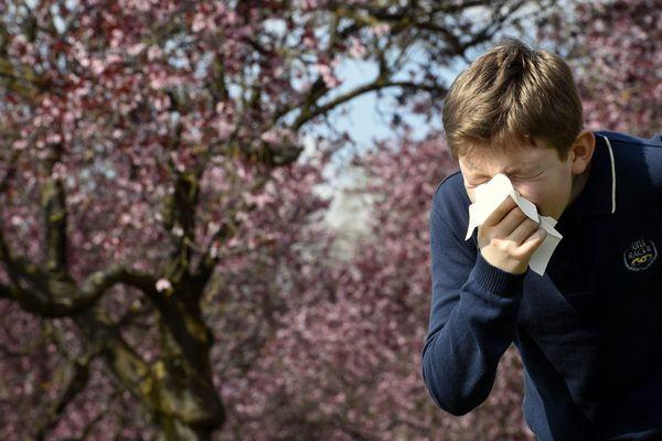 La période de floraison des arbres est une période redoutée par les personnes allergiques.