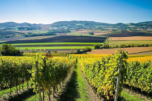 Pour relancer les ventes, la filière viticole compte sur le patriotisme auvergnat.