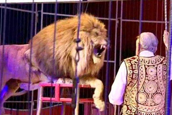 Mike Baray est un drôle de zèbre ! A 75 ans, il est toujours sur la piste. Dans la cage aux lions. C'est là qu'il se sent le mieux. Et ne lui parlez surtout pas de retraite !