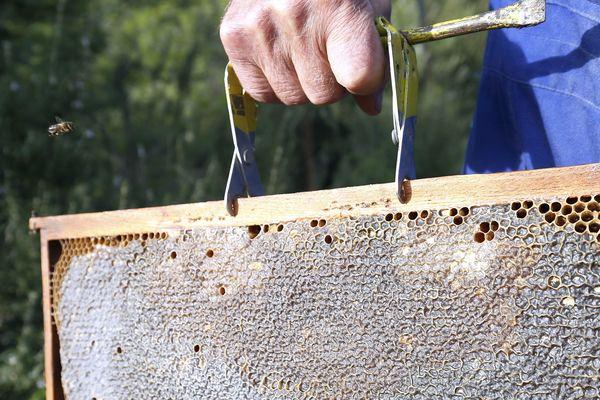 Les vols de ruche sont en expansion en Franche-Comté, comme partout ailleurs.