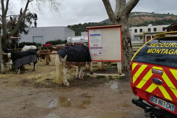 Une cinquantaine de chevaux a été évacuée dans la nuit du vendredi 1er au samedi 2 février 2019. Ils ont été piégés par la montée des eaux de la Gravona.