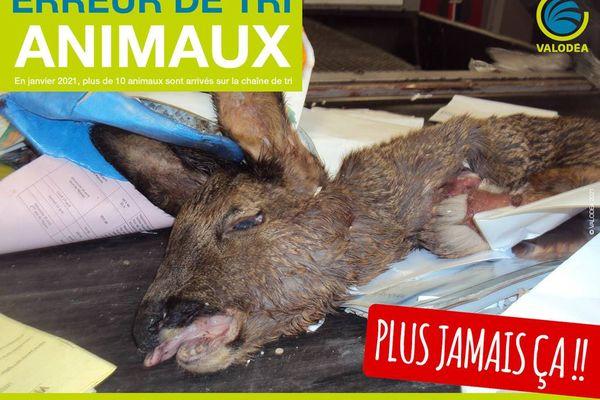Valodea sensibilise aux erreurs de tri, une tête de chevreuil a été retrouvée sur le tapis mardi.