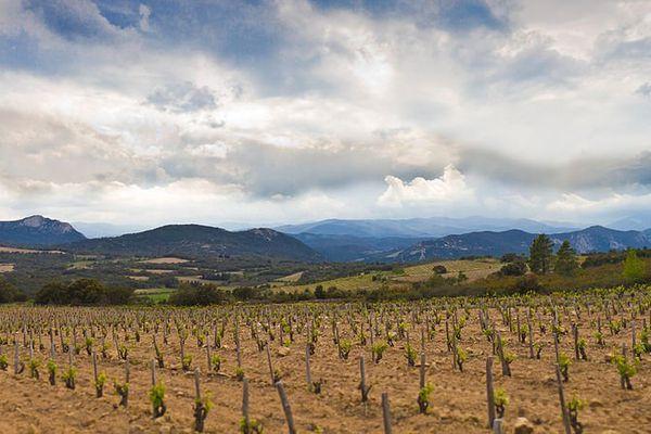 Vignoble de Lesquerde, Côtes-du-roussillon villages.
