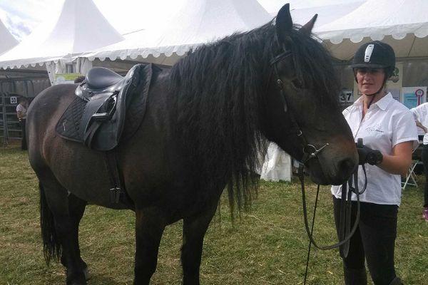 Le Cheval de race Auvergne peut désormais jouer dans la cour des grands. Il peut participer lui aussi à des concours. En attendant, 8 d'entre eux sont venus se présenter aux visiteurs du Sommet.