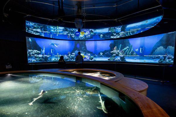 La cité de la Mer Les promesses de l'océan