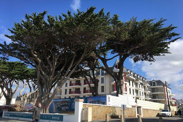 Les cyprès de Lambert, endémiques de la côte Californienne et acclimatés à la côte atlantique, forment ici un joli bouquet d'arbres centenaires