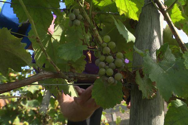 Saint-Prest, un village d'Eure-et-Loir qui a relancé la viticulture dans ce département