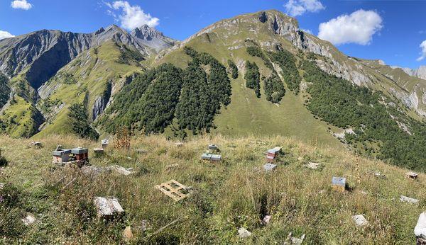 Le rucher de fécondation du Conservatoire de l'abeille noire des Alpes, dans la vallée des Encombres en Savoie.