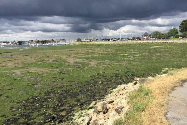 Le phénomène des algues vertes touche également la baie de Lorient
