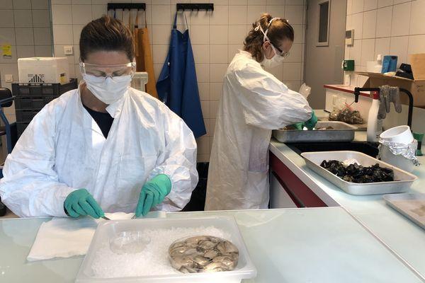 Au centre Atlantique de l'Ifremer, dissection des mollusques prélevés sur les trois façades maritimes françaises