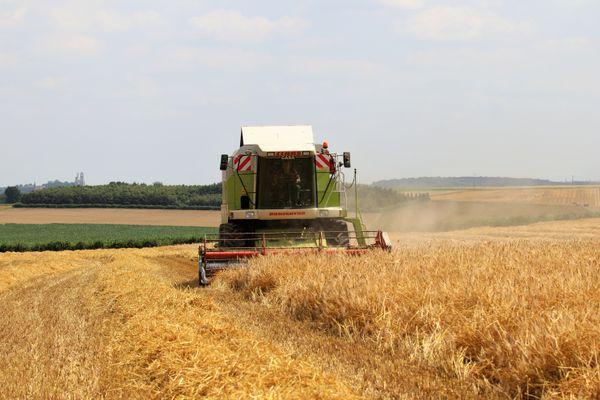 Les agriculteurs du Pas-de-Calais craignent pour la qualité du blé et du colza à cause du mauvais temps.