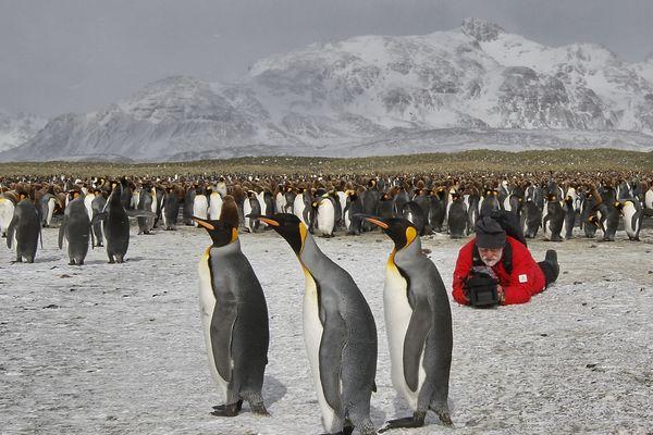 Les pôles subissent le réchauffement climatique de plein fouet