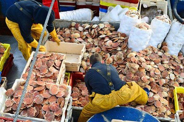 La Normandie compte environ 600 bateaux de pêche et 2200 marins pêcheurs