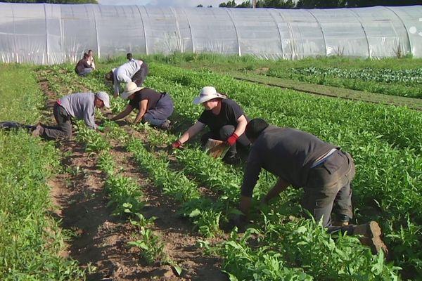 Encadrés par six permanents, des salariés en contrat d'insertion apprennent à cultiver des légumes.