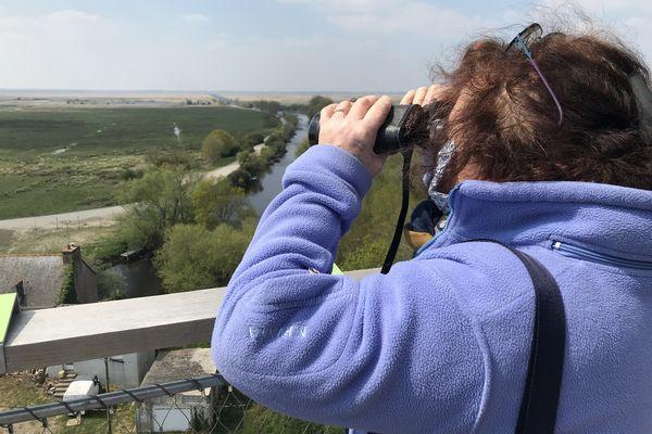 Les jumelles vous emmènent encore plus loin dans le paysage et l'observation du vivant, en haut de la tour de Rozé.