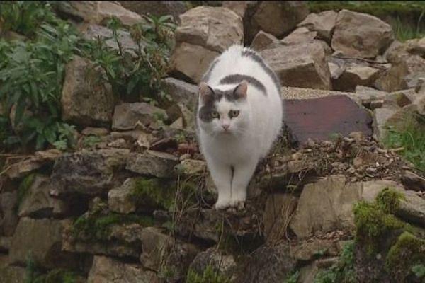 Buffard : les chats seraient empoisonnés