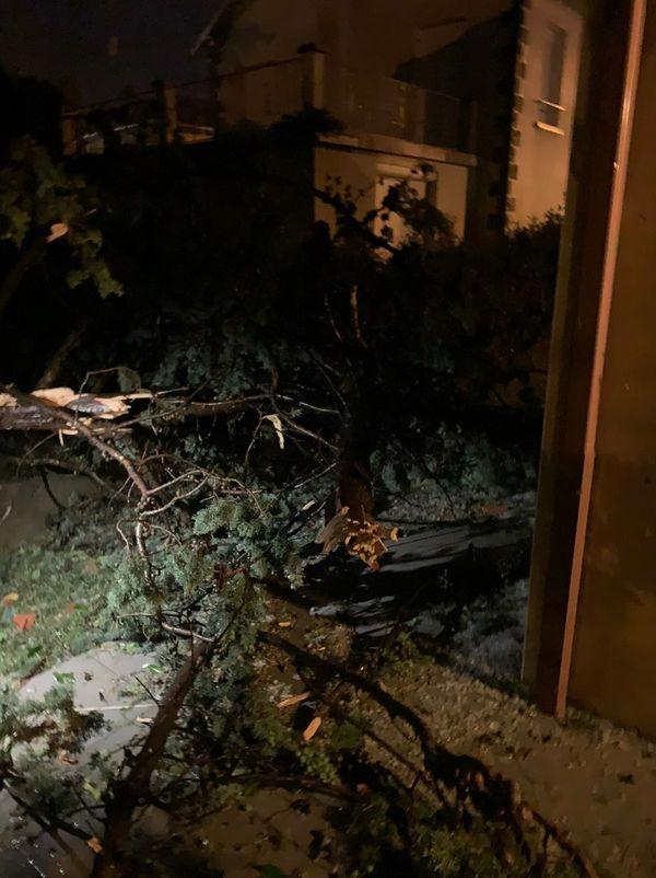 A Issoire, les orages ont fait tomber des arbres, parfois très près des habitations.