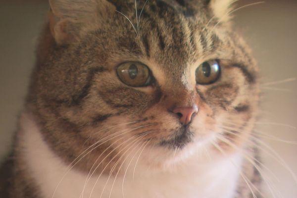 La chatte a parcouru 400 kilomètres avant de trouver refuge chez une habitante d'un village de Haute-Saône