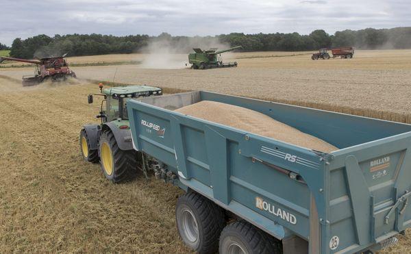 Moisson d'une parcelle de blé tendre