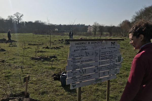Sur la plaine de la Gloriette, un groupe d'une dizaine de personne plante et entretient ce qui deviendra, à terme, un petit carré de forêt.