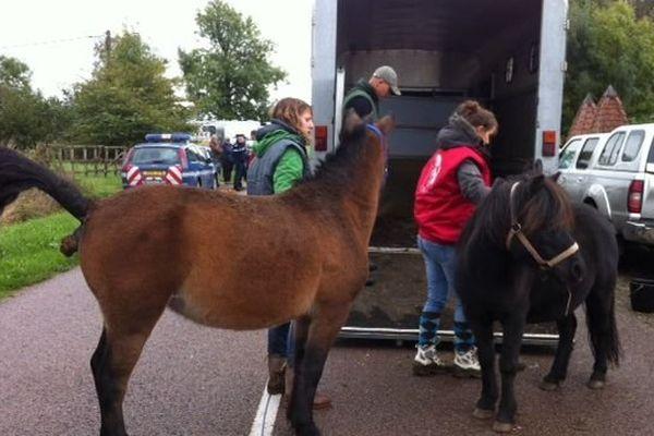 Les services vétérinaires et les gendarmes sont intervenus dans une ferme près de Saint-Germain-du-Bois, en Saône-et-Loire, pour évacuer 35 chevaux vendredi 11 octobre 2013.